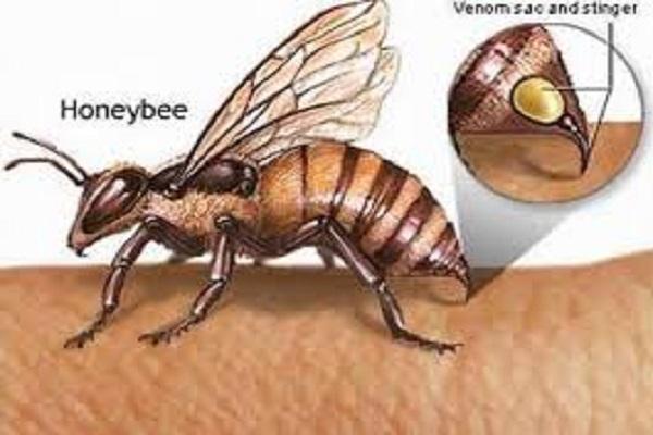 Điềm báo trong giấc mơ thấy ong đốt