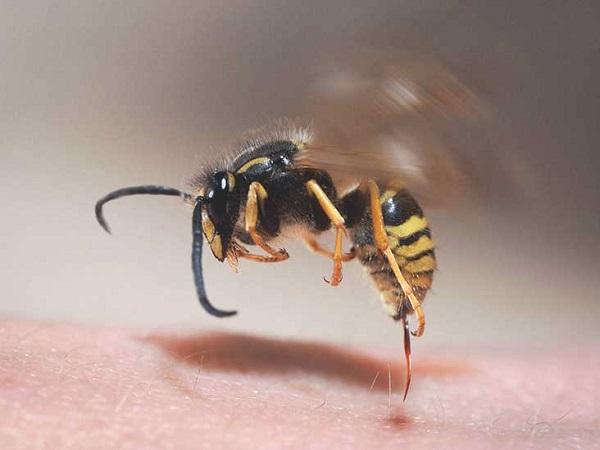 Mơ thấy bị ong đốt