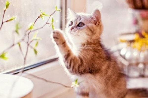 Điềm báo trong giấc mơ thấy con mèo