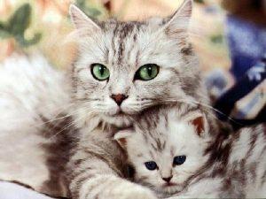 Mơ thấy mèo là điềm báo gì, đánh con số nào may mắn?