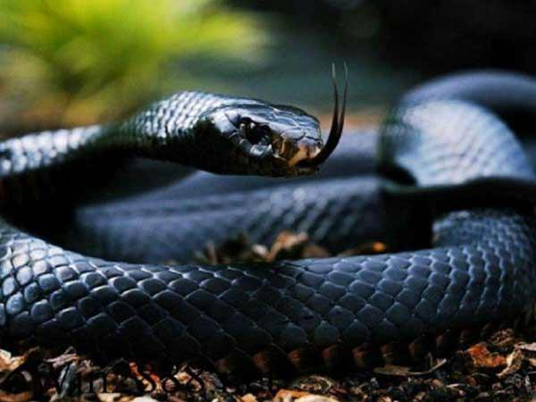 Chiêm bao bắt được rắn báo điềm gì?