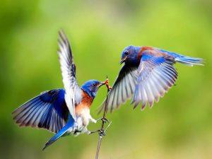 Mơ thấy chim là điềm báo lành hay dữ, nên đánh đề con gì?
