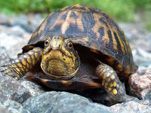 Ngủ mơ thấy con rùa là điềm báo hung hay cát ?