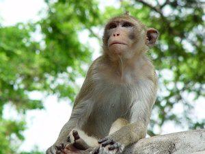 Mơ thấy khỉ đánh con gì? Ý nghĩa nằm mơ thấy con khỉ