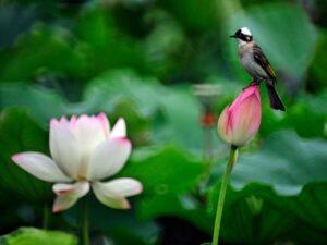 Nằm mơ thấy hoa sen đánh con gì, điềm hung hay cát?